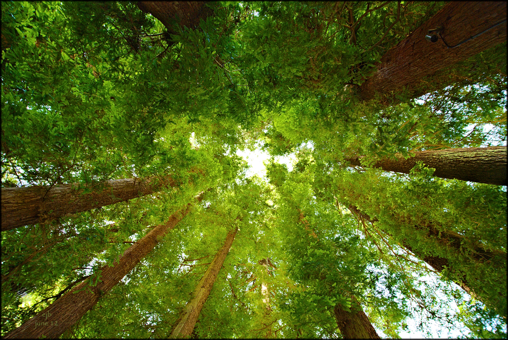 California's Coastal Redwoods—A Reason to Hike this Summer